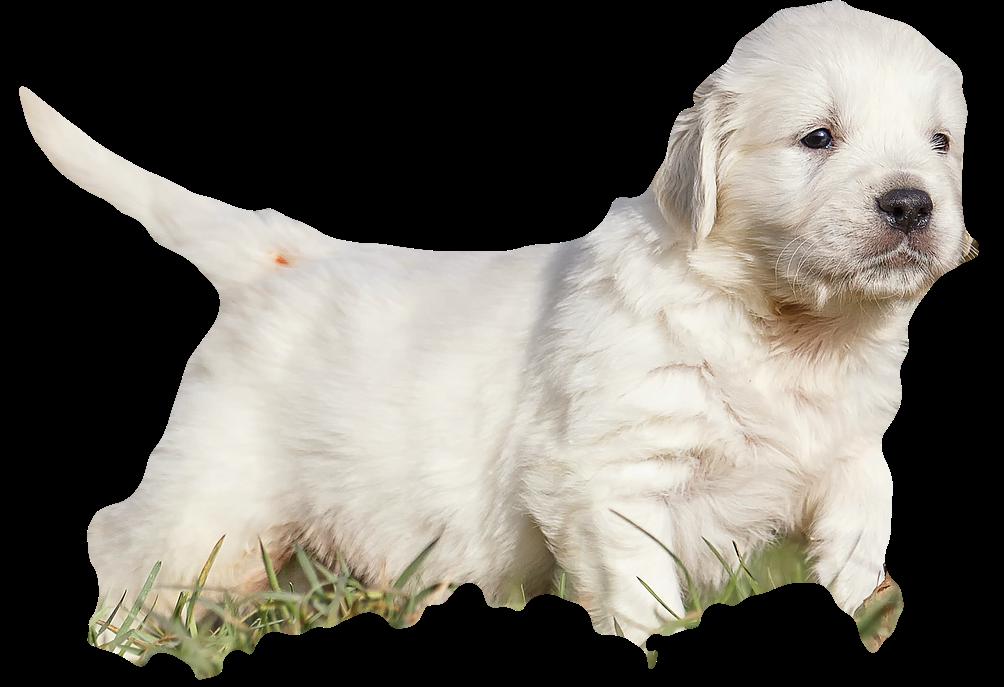 puppyrunner