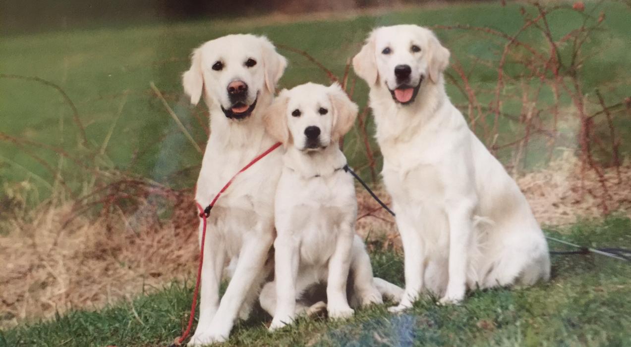 trio jess-emmy- joana