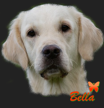 bellabanner
