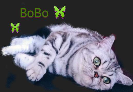 bobonewcollage