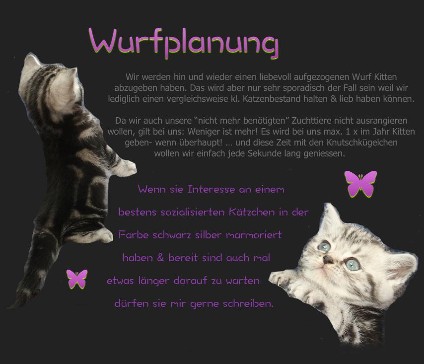 catplandlittercollage